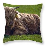 Scottish Highland Cattle 3                          Throw Pillow