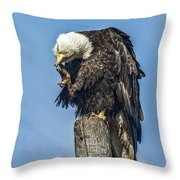 Scratch When You Itch Throw Pillow