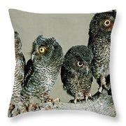 Screech Owl Chicks Throw Pillow