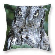 Screech Owl Straight On Throw Pillow