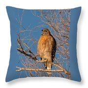 Screeching Red-shouldered Hawk Throw Pillow