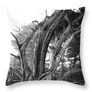 Sculpted Cypress Throw Pillow