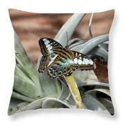 Sea Blue Butterfly Two Throw Pillow