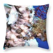 Sea Cucumbers 1 Throw Pillow