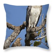 Sea Eagle And Brown Kite Sharing A Tree Throw Pillow