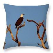 Sea-eagle And The Peewee Throw Pillow