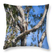 Sea Eagle Vantage Point Throw Pillow