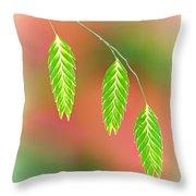 Sea Oats Grass Seedheads Throw Pillow