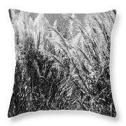 Sea Oats In The Glades Throw Pillow