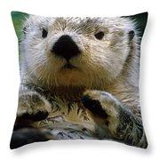 Sea Otter Swimming At Tacoma Zoo Captive Throw Pillow