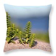 Sea Sandwort Throw Pillow