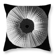 Sea Urchin In Black And White Throw Pillow