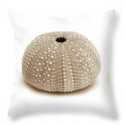Sea Urchins Three In Browns Throw Pillow