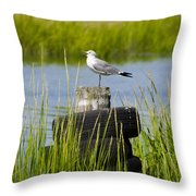 Seagull At Weeks Landing Throw Pillow