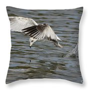 Seagull Dive Throw Pillow