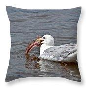 Seagull Eating Huge Fish In Water Art Prints Throw Pillow