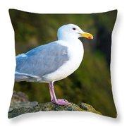 Seagull Heceta Head - Oregon Throw Pillow