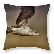 Seagull Oil Throw Pillow by Deborah Benoit