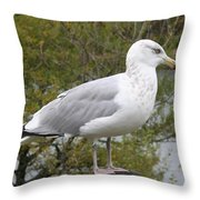 Seagull Outlook Throw Pillow
