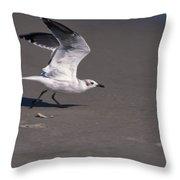 Seagull Preparing To Fly Throw Pillow