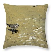 Seagull Scurry  Throw Pillow
