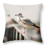 Seagull Standing On Rail Throw Pillow