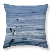 Seagulls At Malaga Sea - Port Of Malaga - Andaluzia - Spain Throw Pillow