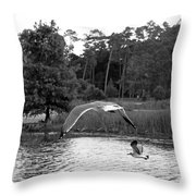 Seagulls In Flight Mb082bw Throw Pillow