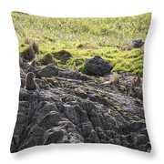Seal - Montague Island - Austrlalia Throw Pillow