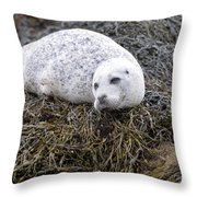 Seal Resting In Dunvegan Loch Throw Pillow