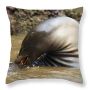 Sealion Grooming Throw Pillow