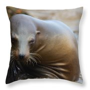 Sealion Mugs For The Camera Throw Pillow