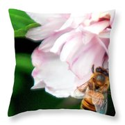 Searching Pink Flower Throw Pillow