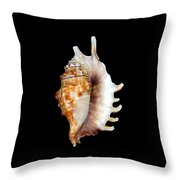 Seashell Lambis Digitata Throw Pillow