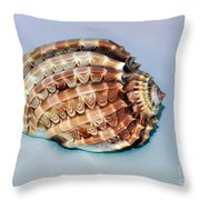 Seashell Wall Art 9 - Harpa Ventricosa Throw Pillow