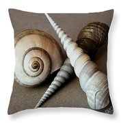 Seashells Spectacular No 24 Throw Pillow