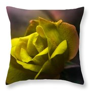 Seasonal Work Throw Pillow by Kelly Rader