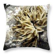 Seaweed Rock Throw Pillow