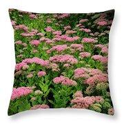 Sedum Garden Throw Pillow
