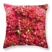 Sedums Upclose Filtered Throw Pillow