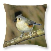 Seed On Tufted Titmouse Throw Pillow