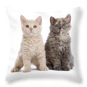 Selkirk Rex Kittens Throw Pillow