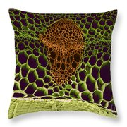Sem Of Pea Stem Throw Pillow by Biophoto Associates