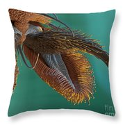 Sem Of Stable Fly Foot Throw Pillow