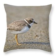 Semi-palmated Plover Pictures 34 Throw Pillow