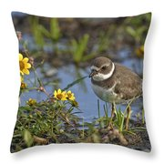 Semi-palmated Plover Pictures 44 Throw Pillow
