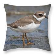 Semi-palmated Plover Pictures 59 Throw Pillow