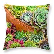 Sempervivum Or House Leeks Mixed  Throw Pillow