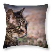 Senior Cat Throw Pillow