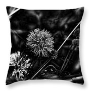 Sensitive Briar Schrankia Nuttalii  Throw Pillow